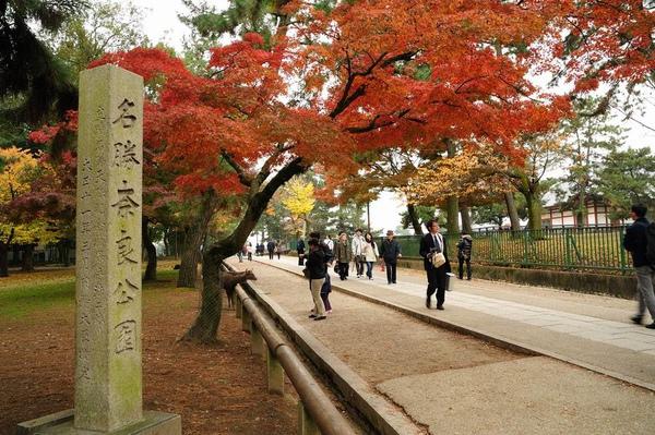 日本出差記行0013-奈良.jpg