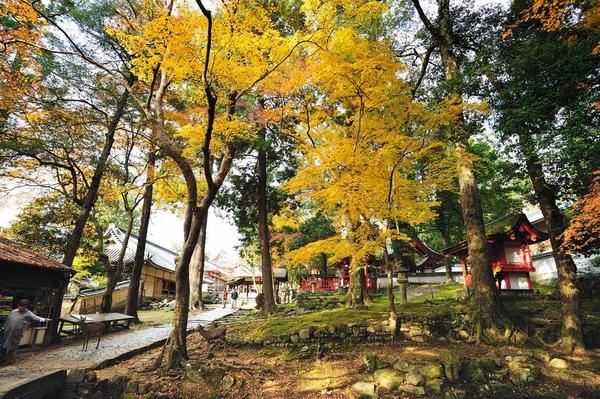 日本出差記行0226-奈良.jpg