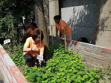1030713社區綠美化 (4).jpg
