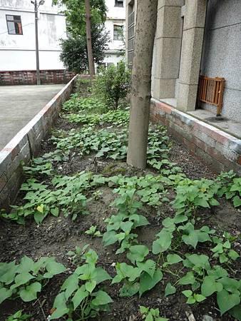 103年社區綠美化 (2).jpg
