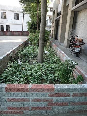 103年社區綠美化 (3).jpg