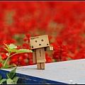 nEO_IMG_照片 152.jpg