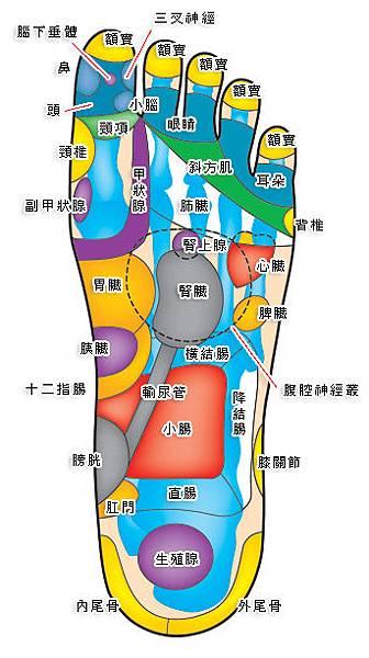 腳底穴道圖二.jpg