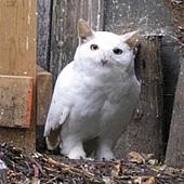Meowl.jpg
