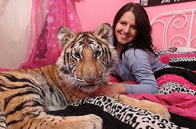 老虎當寵物