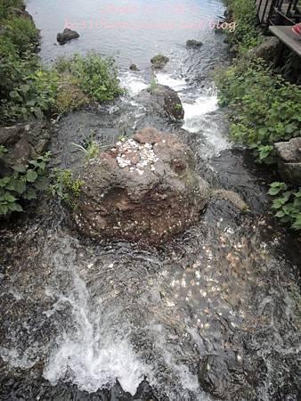 濟州島 215