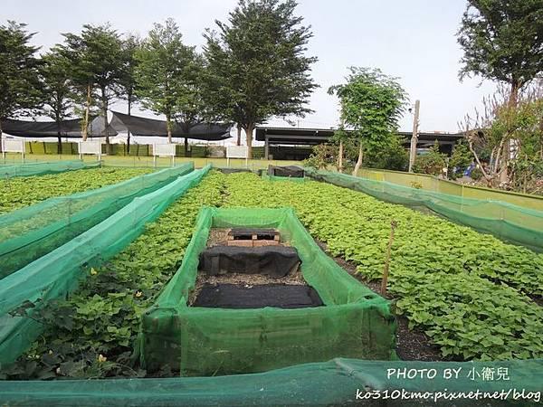 小品蝸牛生態農場_09