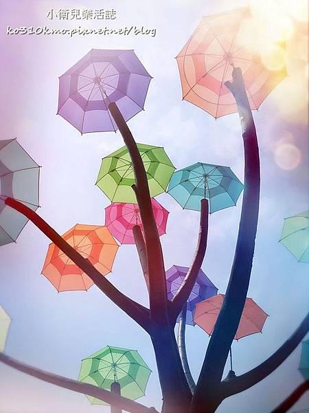 彰化和美-卡里善之樹 (6)