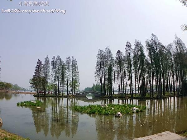 2017無錫太湖黿頭渚國際櫻花節 (1)