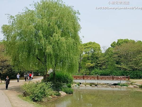 2017無錫太湖黿頭渚國際櫻花節 (12)