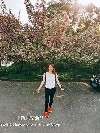 2017無錫太湖黿頭渚國際櫻花節 (26)