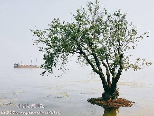 2017無錫太湖黿頭渚國際櫻花節 (21)