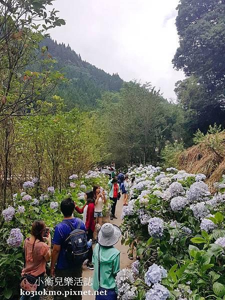 杉林溪-藥花園 (3)