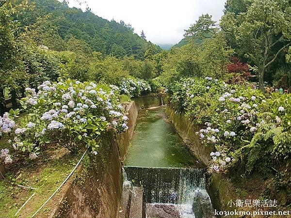 杉林溪-藥花園 (7)