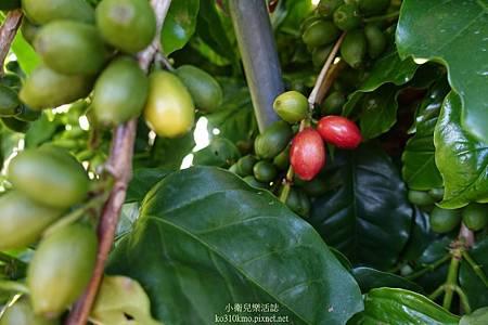 新社夜景-山沐斯達sunmoonstar (36)