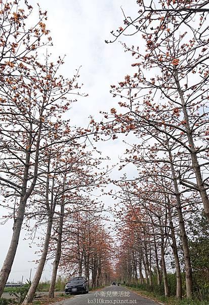 彰化木棉花-東螺溪木棉花 (1)
