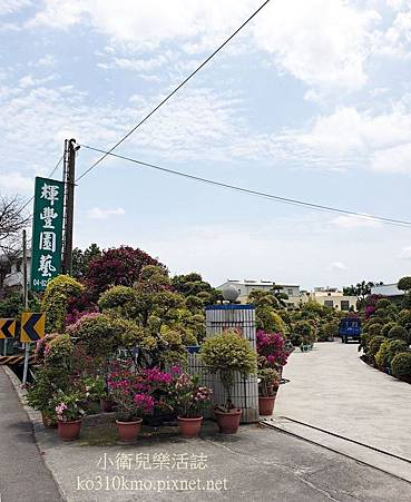 彰化田尾景點-輝豐園藝-九重葛之家 (4)