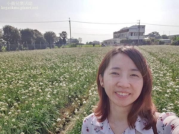 2019彰化北斗韭菜花海 (3)