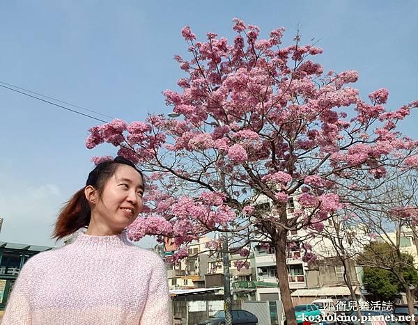 彰化景點-南郭國小-紅火風鈴木