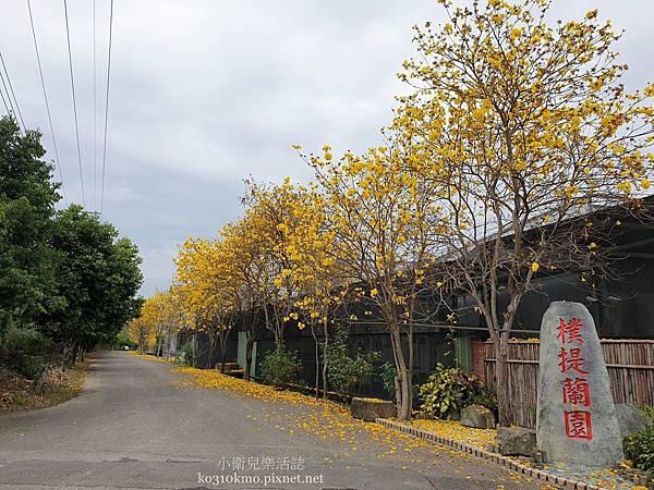 南投黃花風鈴木-樸提蘭園