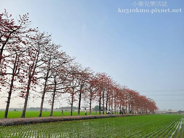 南彰化景點.竹塘木棉道