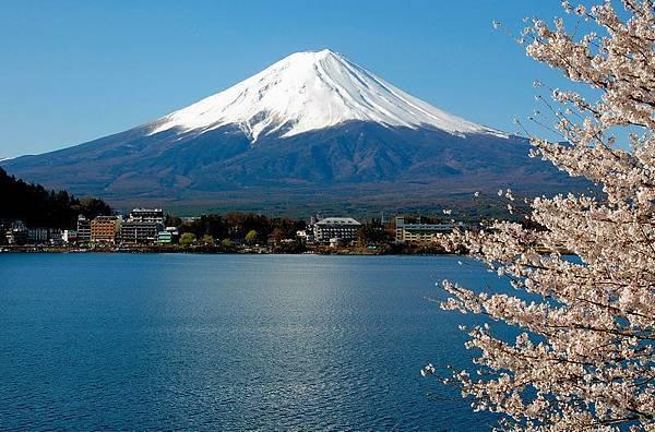 河口湖桜.jpg