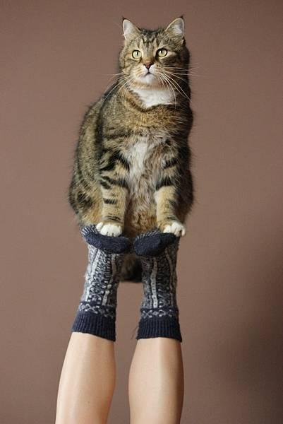 今天就一起來看看人工智慧幫貓咪取了哪些妙妙妙的名字!