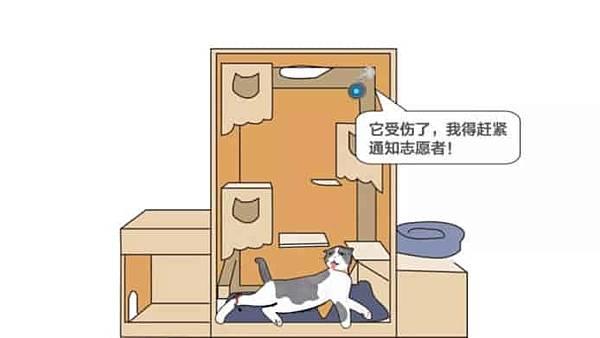 ai-cat-sick-detector.jpg