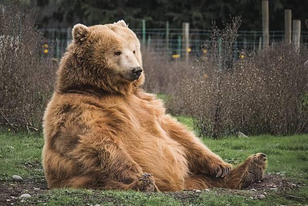 一起來看看這熊臉辨識人工智慧如何保育棕熊!