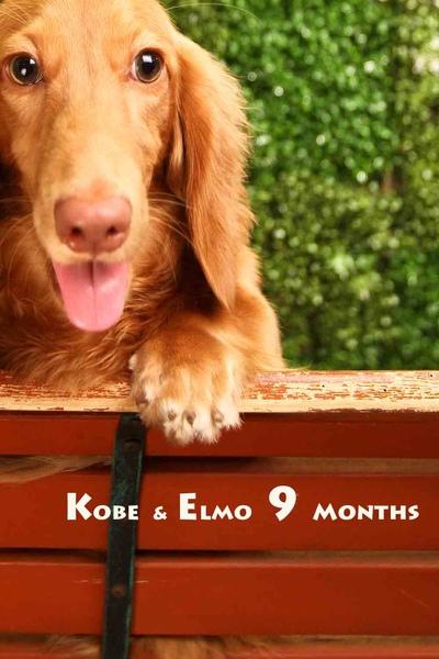Kobe Elmo九個月-04-1.jpg