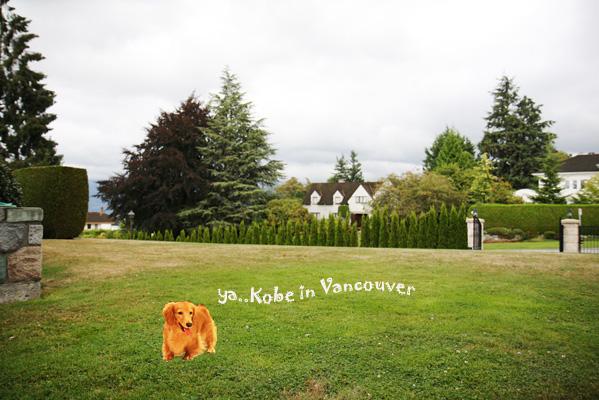 kobe in Vancouver.jpg