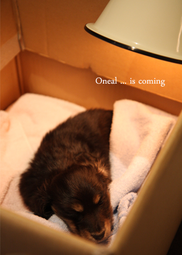 oneal is comimg-02.jpg