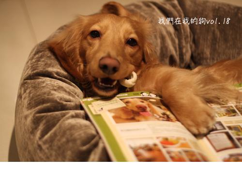 在我的狗-04.jpg