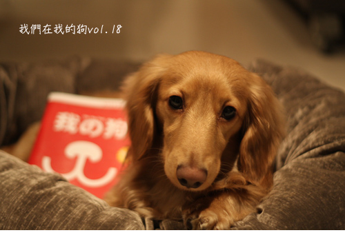 在我的狗-01.jpg