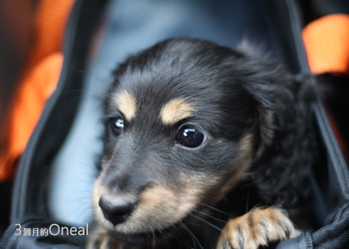 oneal3months-5.jpg