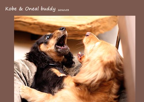 buddy-01.jpg
