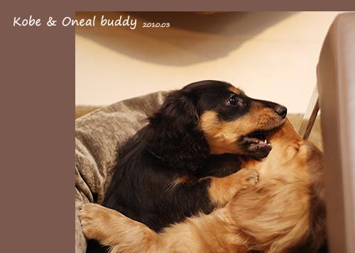 buddy-02.jpg