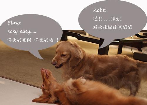 kobe+elmo-02.jpg