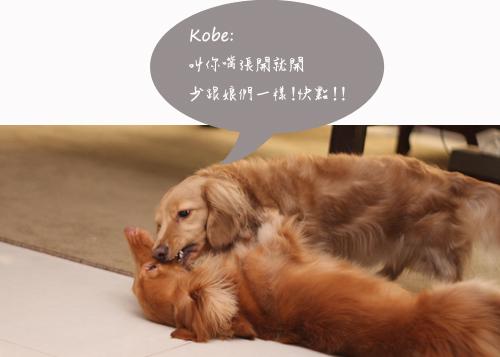 kobe+elmo-03.jpg