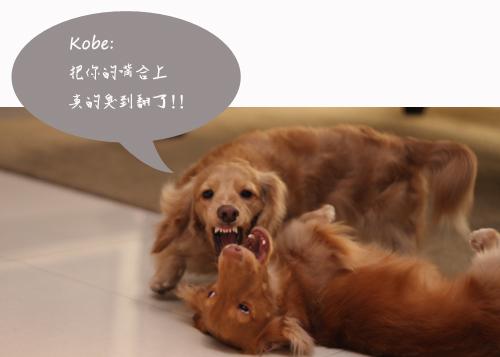 kobe+elmo-06.jpg