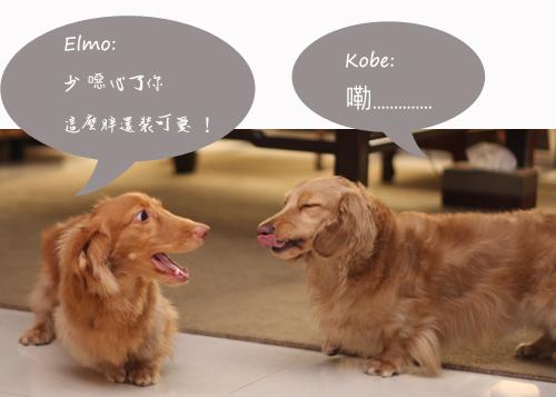 kobe+elmo-09.jpg