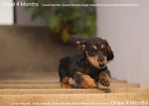 oneal4months-3.jpg