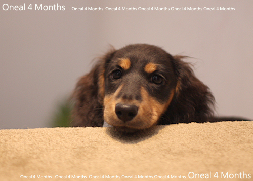 oneal4months-5.jpg