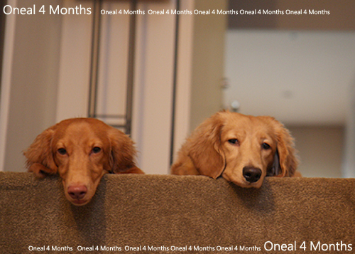 oneal4months-6.jpg