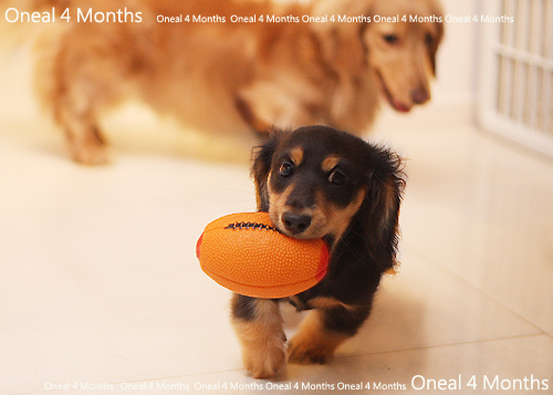 oneal4months-17.jpg