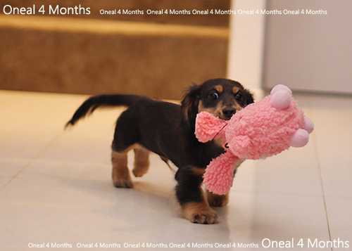 oneal4months-18.jpg