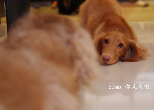 elmo又來啦-6.jpg
