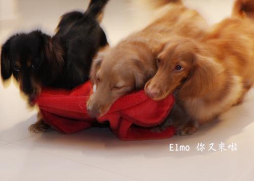 elmo又來啦-7.jpg