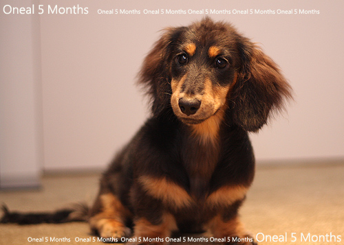 oneal5months-7.jpg