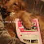 在我的狗-05.jpg